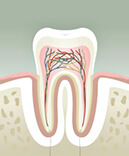 Endmontreal Advanced Root Canal Clinical Cases